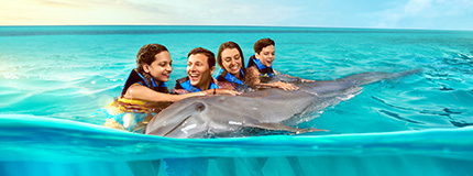 Anguilla-St Maarten-Dolphin Encounter