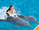 dolphin royal swim from cancun, quintana roo, mexico