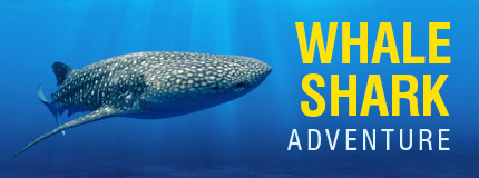 Cancun-Whale Shark Adventure