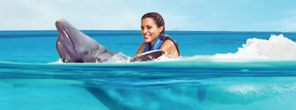 Cozumel - Dolphin Swim Adventure