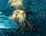 Gallery Sea Lion Discovery