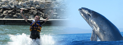 Los Cabos-Whale Watching San Jose + Dolphin Royal Swim Plus