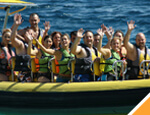 Gallery Dolphin Swim & Ride All Inclusive
