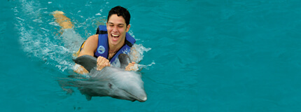 Los Cabos - Dolphin Swim & Ride All Inclusive