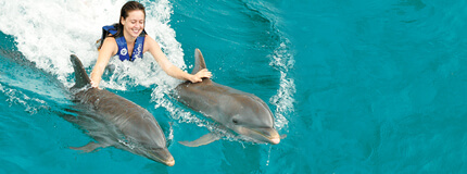 Los Cabos - Dolphin Royal Swim All Inclusive