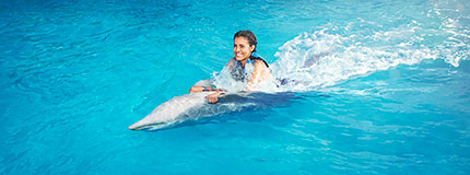 Gulf World-Dolphin Swim Adventure