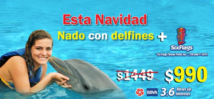 Navidad con delfines