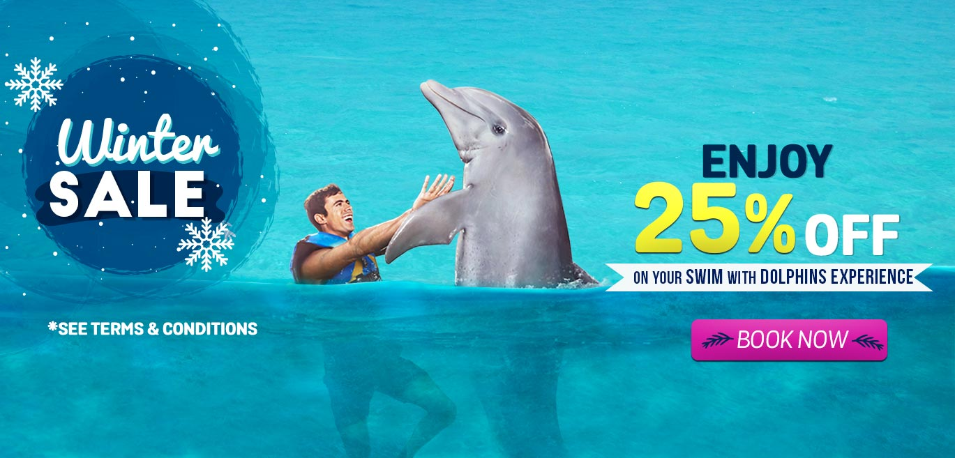 swim with dolphins in dolphin cove cayman