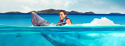 Tortola - Dolphin Swim Adventure + Ferry St. Thomas