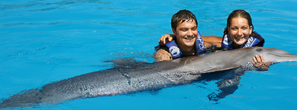 Puerto Vallarta - Dolphin Encounter