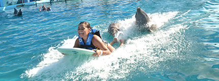 Puerto Vallarta-Dolphin Swim Adventure